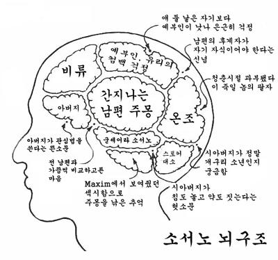 西奴的脑结构图